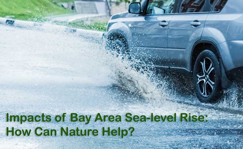 Kahl Consultants - Enviromental Forum of Marin Impacts of Bay Area Sea level Rise