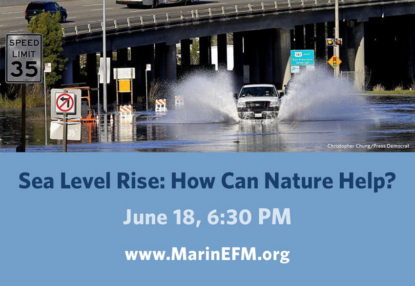 Kahl Consultants Environmental Forum of Marin Sea Level Rise